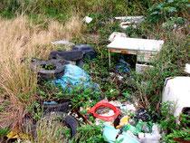 道路脇の草むらに不法投棄された廃棄物=竹富町(竹富町役場提供)