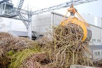 操業中の石垣島製糖(資料写真)