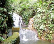 市は白水川の水を使った水道水で石垣島をPRする。写真は白水水源地(市提供)