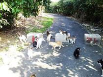 無責任な飼い主によって捨てられた猫たち