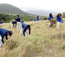 八重山農林高校伝統行事の草刈り大会が行われた=27日午前