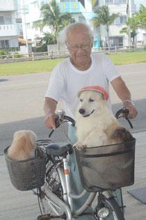 1日に朝夕数回の散歩が日課。家では吠える2匹も、自転車に乗るとおとなしい=登野城漁港