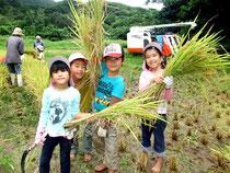 稲刈りを体験した児童たち=7日午前、川平
