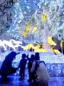 石垣市に登場した〝光のツリー〟を見上げる親子=20日午後6時、石垣市役所第2駐車場前交差点