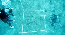 水中文化遺産見学会で海底を調査する東海大の研究者=今年6月(同大提供)