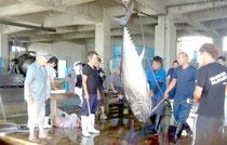八重山漁協に水揚げされる本マグロ(6月)
