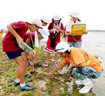 「なまこ発見!」「ウミヘビだ!」とあちこちで声を上げ、はしゃぐ大浜小学校の児童=16日午後、大浜集落そばの海岸