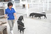 ミニブタなどの小動物と触れ合うことも