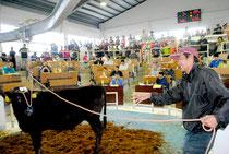 高値取り引きとなった初セリ。60万円超の価格に生産者の顔もほころぶ=11日午後、八重山家畜市場