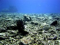 赤土汚染によってガレ場になってしまったミドリイシサンゴの群落(資料写真)