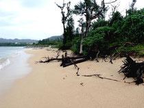 2007年10月撮影の野底海岸。まだ前面のモクマオウは立っている