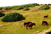 自衛隊基地建設が予定されている与那国町の南牧場(2012年12月)