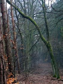 Herbstliche Stimmung im Nebel, Frühling 2013