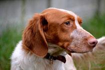 """Canaille, de l'italien """"canaglia"""", troupe de chiens, du latin """"canis"""", chien"""