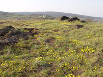 Blick von den Retzer Trockenrasen auf die bewaldeten Ausläufer des Manhartsberges