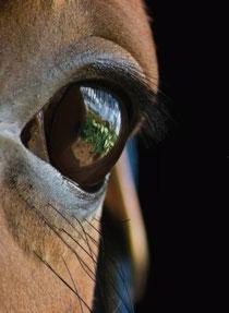 оценка лошади