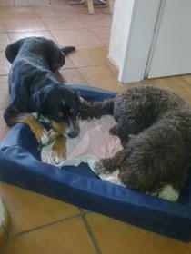 Farah und Ela mit Knochen