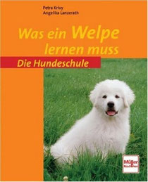 Was ein (Irish Terrier-) Welpe lernen muss