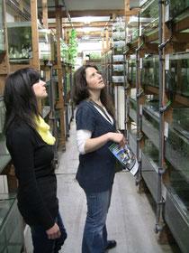 Inspektion des Warmwasserhauses mit 3500 Aquarien