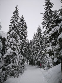 Winterwandern Arosa
