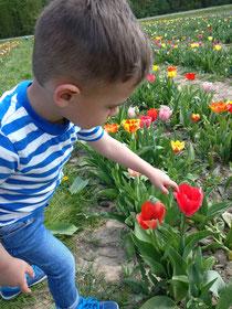 Blumen pflücken gehen