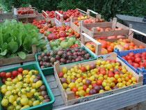 Tomaten-Raritäten