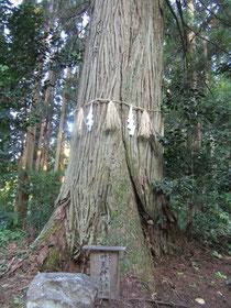 木野山神社御神木