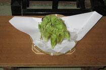 3月12日収穫した蕗の薹