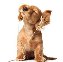 уши собаки кошки