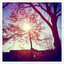 街中の公園で日向ぼっこ