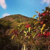 近くの金立山に登りまくりの新年スタート♪