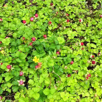 野の花もきれいな季節♪