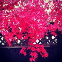 カナダ・バンクーバーも紅葉の季節