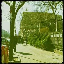 NY/本物の木のクリスマスツリーを売る街角。クリスマスが終わったら用無しになって捨てられる。なんか可哀想。
