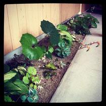 うちの日陰ガーデン