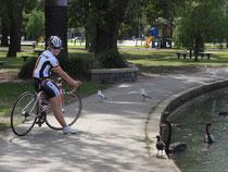 Rollern im Albert Park- Hallo ihr schwarzen Schwäne