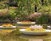 庭園の池に浮かぶ花皿鉢