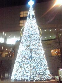 大きなツリーです