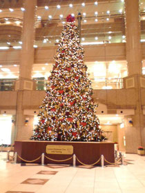 横浜みなとみらいの大きなクリスマスツリー