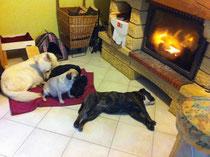photos des chien au coin du feu