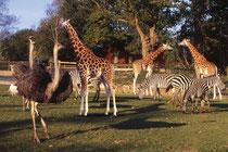 zoo de Champepus