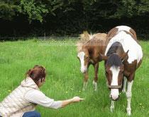 Pony-Coaching für Fohlen und Stute