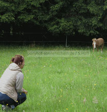 Das Wesen und den Körper eines Ponys verstehen.