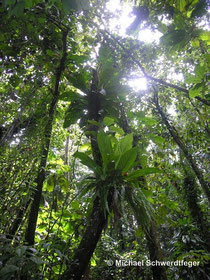 Tropischer Regenwald in der Karibik