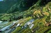 Reisfelder in den Bergen