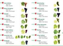 Grafik - 16 Weinsorten