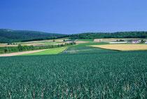 富良野市麓郷 メルヘンの丘を望む