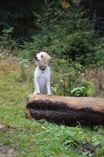 Ari im Harz