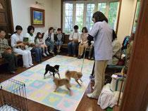 静岡県の動物病院でパピークアラスをした時です