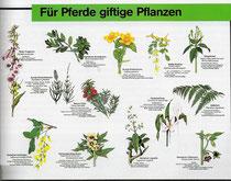 Nicht alle Pflanzen können eingesetzt werden